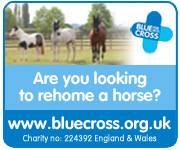 Blue Cross (Leicestershire Horse)