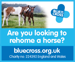 Blue Cross 2020 B (Leicestershire Horse)